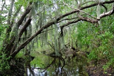 Everglades, Terres humides_usproject2016.com
