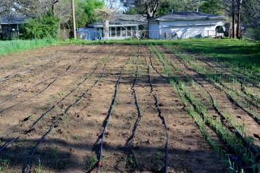 Cardo's Farm