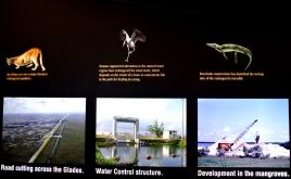 Everglades : un territoire menacé par les humains_usproject2016.com