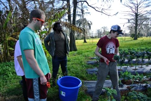 Grow Dat Farm, Sarah montrant comment récolter le Kale à John, Rosie et Randolph_usproject2016.com