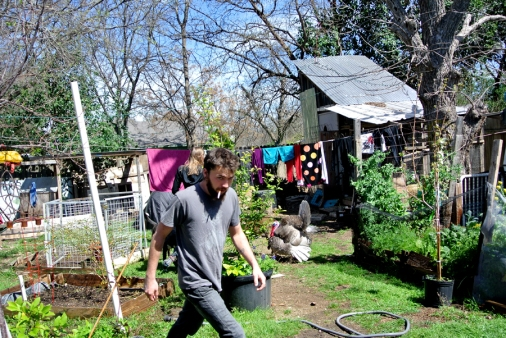 Roots cooperative farmer