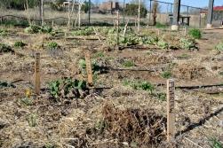 Gaia Gardens 8