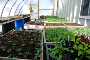 Gaia Gardens 11