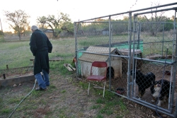 Turkey, Dale et ses chiens
