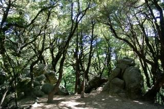 Castle Rock State Park 1