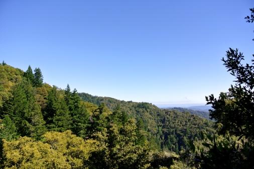 CRSP 7 forêt