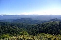 CRSP 8 forêt et vautour