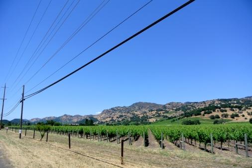 Napa Valley Wine (1)