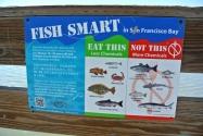 SFBA Miam des poissons