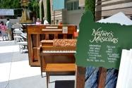 Nature's Musicians