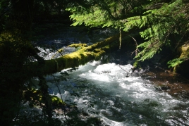 clackamas-river